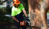 Tree Remova Melbourne - DMS Tree Company is one of the leading arborist firms in Victoria offering tree pruning melbourne, tree trimming, stump removal, stump grinding,  tree mulching Melbourne ,chipping Melbourne and tree removal Melbourne.