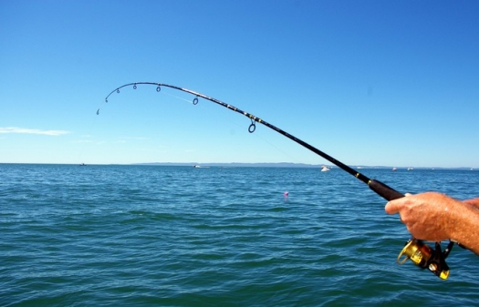 Are You Looking For Fishing In Melbourne?