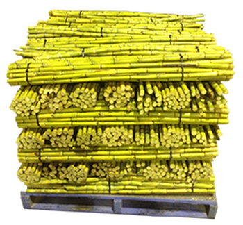 Buy Sugar Cane Sticks