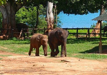 Join our Sri Lank adventure group tours packages