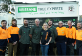 Brisbane's Tree Care Services