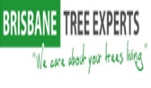 Qualified Tree Arborists Brisbane