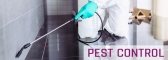 Pest Removal Services in Brisbane