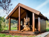 Get Excellent Facility of Dog Boarding in Bundoora