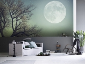 Cheap Wall Murals