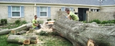 Tree removal Brisbane north