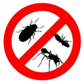 Professional Pest Removal Geelong