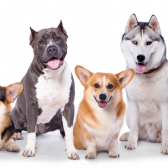 SEPARATION ANXIETY ONLINE COURSE FOR DOGS ONLY $49