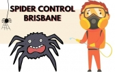 Ace Spider Removal Brisbane